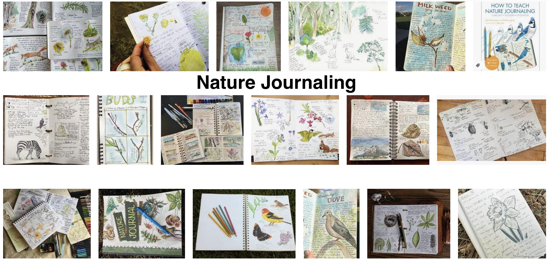 nature journaling image