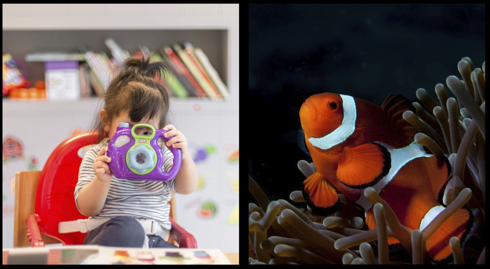 composite image: left infant child with toy; right detail of a clownfish