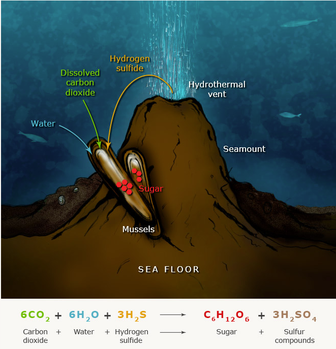 https://teara.govt.nz/en/diagram/8960/photosynthesis-and-chemosynthesis